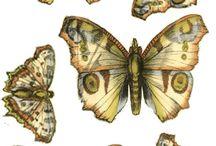 Бабочки, птички ...