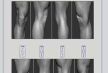 Kroppens oppbygging