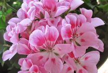 Flores Exuberantes