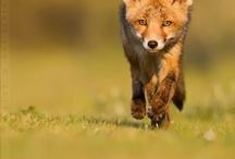 Foxy / by Elizabeth