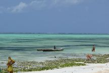 Zanzibar / Iles aux épices...