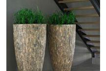 Planten voor in serre