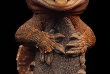 Frogs & Geckos and maybe more......