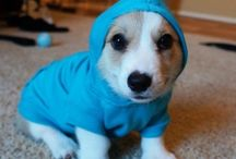 Cute and Funny animals(GIF)