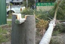 Tree felling techniques