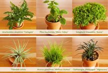 Houseplants / Every home need some greenery to bring it to life! / by The Black Squirrel