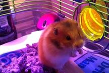 My Hamsters / by Lisa Swatsky