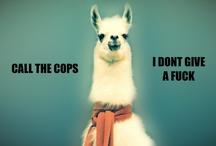 Animals are so weird. / by Nina Kay