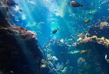 Le fond de l'océan!! Une merveille!!