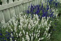 Gardening: Drought Tolerant Plants