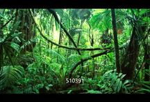 Junglebook kamp