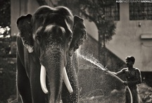 Animals / by Audi Photography