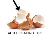 eggshells uses