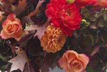 MG Autumn Flora