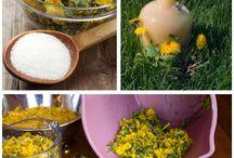 Wild Edibles & MEDICINAL PLANTS