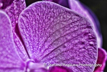 Orchidaceae / Nikon D3000 Tamron 90mm