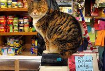 Bodega Cats / by Jeff Jordan