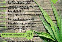 medyczna marihuana / medical marijuana / medyczne zastosowanie konopi