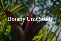 School - botany