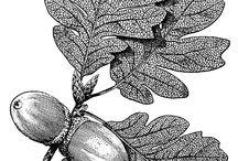 Shabby Transfer Pflanzen
