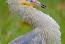 inspiration-birds