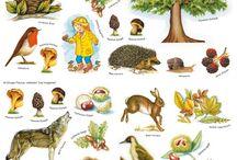 MS Lesné zvieratá