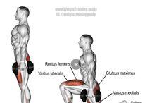 Gym body parts