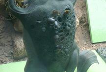 płaz w skorupie / frogs