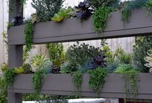 Succulents by Season in a Trunk / We're obsessed.