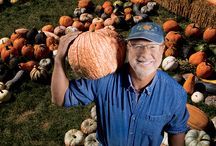 Pumped up for Pumpkins / Illinois is #1 in pumpkin farming! Click around to find pumpkin patches and recipes. / by Illinois Farm Bureau