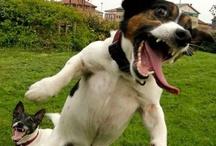 psycho dogs / by JANE MARTINEZ
