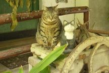 La Traversina Cats