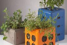 Sprouters / Man kan dyrke op til 40 forskellige spire af  frø, korn, kerner, linser og bønner.