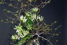 Fleurs dojo