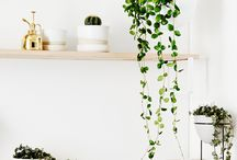 Dream Home: Indoor Plants