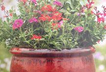 Container gardens for hummingbird & butterflies / Container gardens/flowers for butterfly and hummingbirds