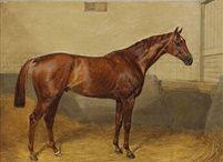 Horseracing (thoroughbred) print / Портреты лошадей чистокровной верховой породы