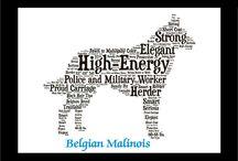 BELGIAN M