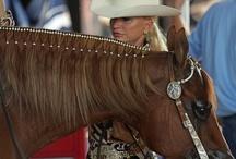 Trecce per cavalli e cure adeguate