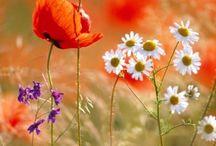 Garden / Flowers / Nature