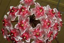 Mum Çiçeği Buketi