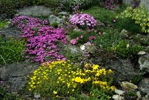 Outdoor Space / by Kathy Long