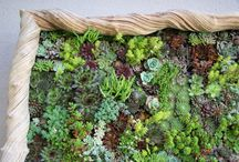 Vertical Gardening / Think the other dimension; small gardens (or large ones, for that matter) can be expanded by using walls or hedges, vines, green walls or gardens. / by Drought Smart Plants