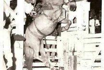 CowboyUp! / by Darth Baalz
