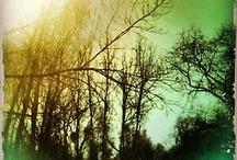 Trees Free Me / by ThreeCorners