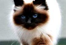 pisiciPisici