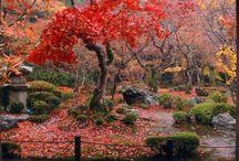 Autumn - Japan