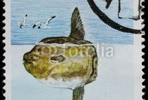 Stamps with Fish