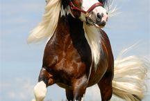 лошади /