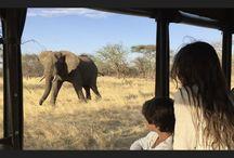 Tanzanie quand tu nous tiens / Entre animaux sauvages et plages de rêve, la Tanzanie n'en finis pas de nous charmer.
